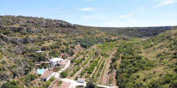 Ecological fruit farm for sale in Alaior, Menorca
